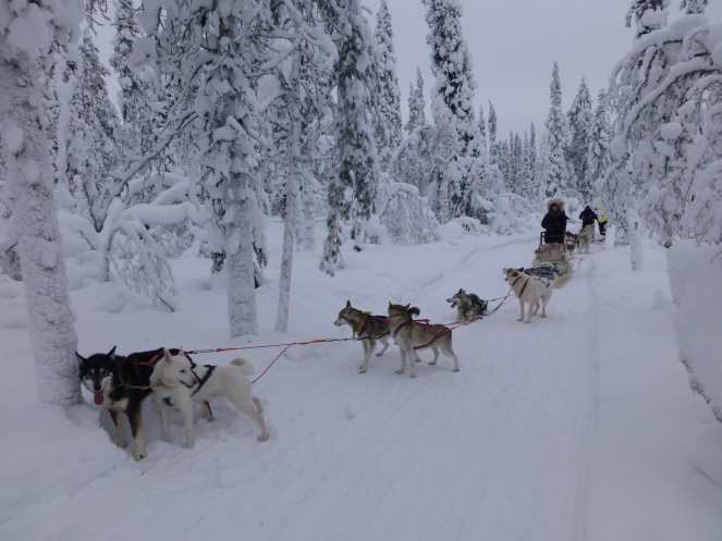 Lappland07